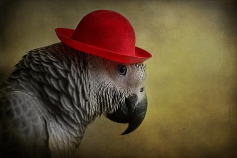 птица в шляпе