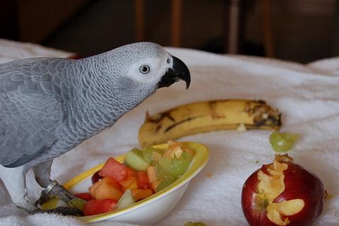 greys-and-food